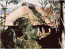 白雲堂茶苑